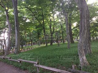 公園の写真・画像素材[556930]