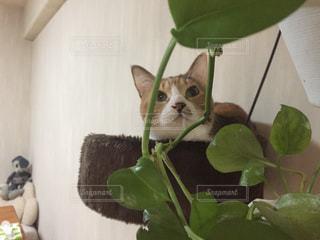 猫の写真・画像素材[556953]