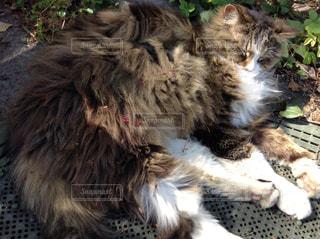 猫の写真・画像素材[568437]