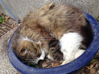 猫の写真・画像素材[568518]