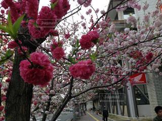 花の写真・画像素材[568662]