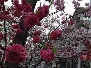 花の写真・画像素材[568665]