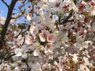 花の写真・画像素材[575878]