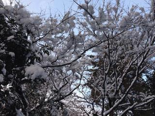雪の写真・画像素材[583940]