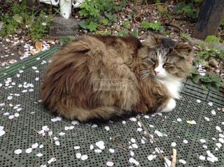 猫の写真・画像素材[587556]