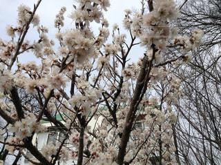 花の写真・画像素材[592455]