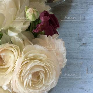 花の写真・画像素材[537017]