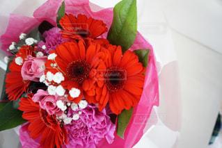 花の写真・画像素材[543076]