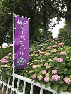 花の写真・画像素材[537293]