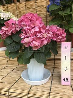 花の写真・画像素材[538870]