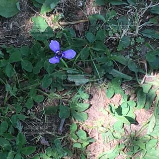 草花の写真・画像素材[553015]