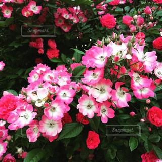 庭の写真・画像素材[604367]