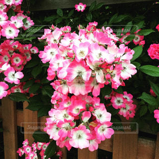 庭の写真・画像素材[604369]