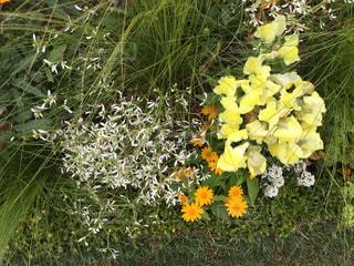 庭の写真・画像素材[605131]