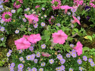 花の写真・画像素材[605150]