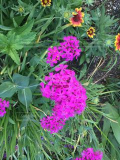 花の写真・画像素材[605248]