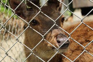 動物の写真・画像素材[538595]