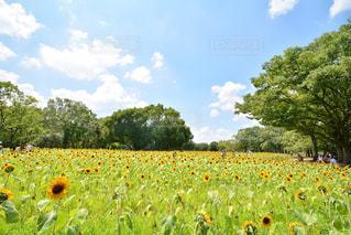 お花畑の写真・画像素材[218652]