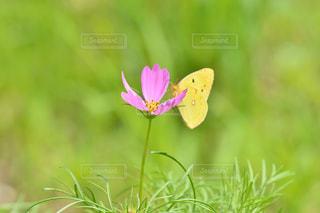 お花畑の写真・画像素材[218655]