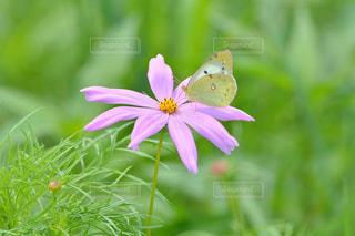 お花畑の写真・画像素材[218657]