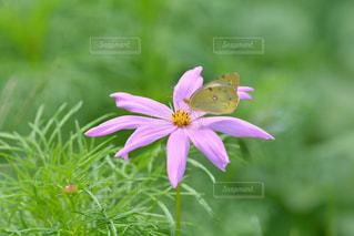 お花畑の写真・画像素材[218658]