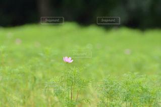 お花畑の写真・画像素材[218659]