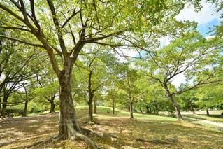 森林 - No.218663
