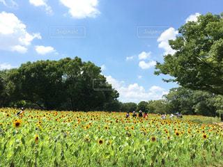 お花畑の写真・画像素材[218670]