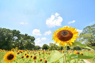 お花畑の写真・画像素材[218672]