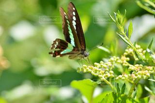 お花畑の写真・画像素材[218673]