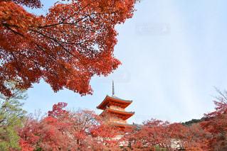 清水寺と紅葉の写真・画像素材[891378]