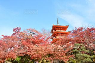 清水寺と紅葉の写真・画像素材[891381]