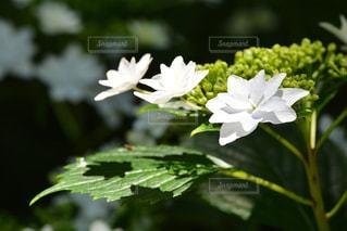 近くの花のアップの写真・画像素材[1222184]