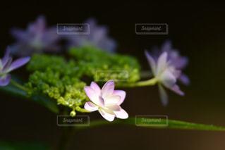 近くの花のアップの写真・画像素材[1222187]
