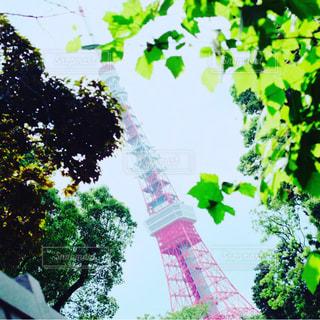 東京タワーの写真・画像素材[538535]
