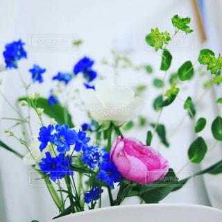 花の写真・画像素材[538628]