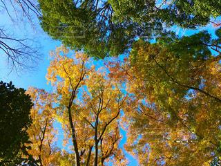 見上げた空と紅葉の写真・画像素材[902309]