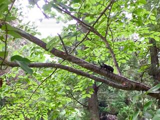 森で見つけたオスのカブトムシの写真・画像素材[1263495]