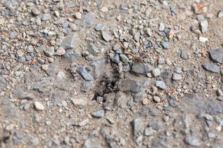 アスファルトにある蟻の巣を行き交う蟻たちの写真・画像素材[2171676]