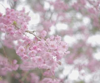 風景 - No.538707