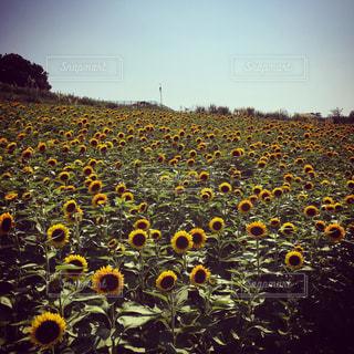 夏の写真・画像素材[539221]