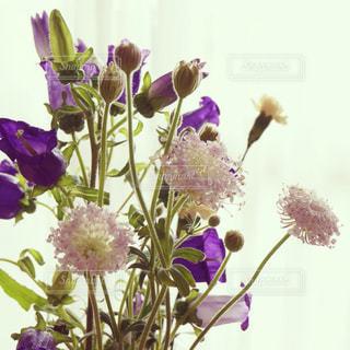 花の写真・画像素材[544492]