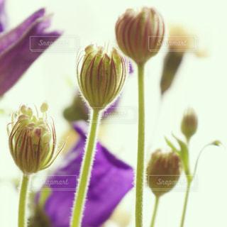花の写真・画像素材[544496]