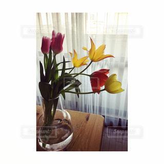 花瓶のチューリップの写真・画像素材[1039926]