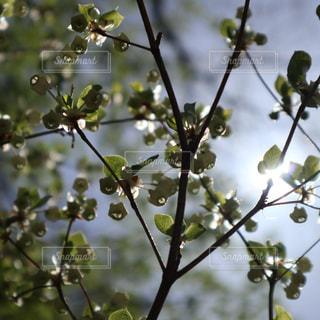 木の枝にとまった鳥の写真・画像素材[1141028]
