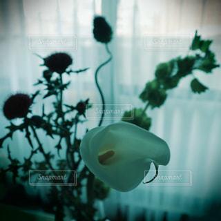 花の花瓶が窓の前で座っています。の写真・画像素材[1141033]