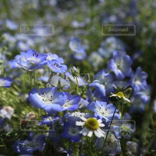 紫色の花一杯の花瓶の写真・画像素材[1193012]