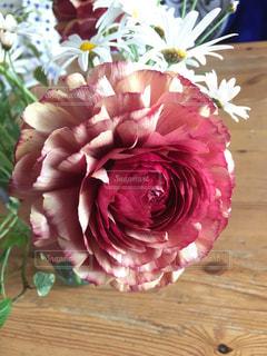 近くの花のアップの写真・画像素材[1276880]