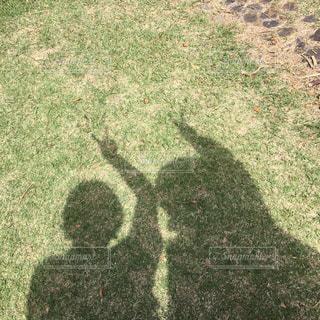 芝生の写真・画像素材[544303]