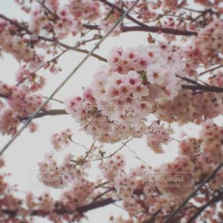 春 - No.539048